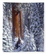 Giant Sequoia Trees Sequoiadendron Fleece Blanket