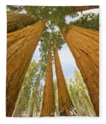 Giant Sequoias And First Snow Fleece Blanket