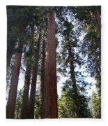 Giant Sequoias - Yosemite Park Fleece Blanket