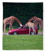 Giraffe. Animal Studies Fleece Blanket