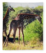 Giraffes On Savanna Eating. Safari In Serengeti Fleece Blanket