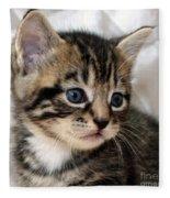 Gizmo The Kitten Fleece Blanket