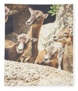 Goats On A Rock Fleece Blanket