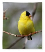 Gold Finch Fleece Blanket