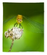 Golden Dragonfly On Perch Fleece Blanket