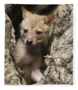 Golden Jackal Canis Aureus Cubs 2 Fleece Blanket