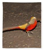 Golden Pheasant Pair Fleece Blanket