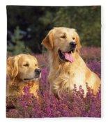 Golden Retriever Dogs In Heather Fleece Blanket