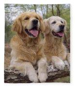 Golden Retriever Dogs Fleece Blanket