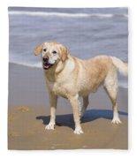 Golden Retriever On Beach Fleece Blanket