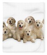 Golden Retriever Puppies, In A Line Fleece Blanket