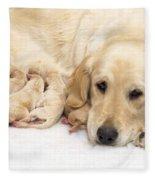 Golden Retriever Puppies Suckling Fleece Blanket