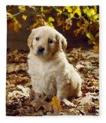 Golden Retriever Puppy Dog In Fallen Fleece Blanket
