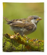 Gorrion House Sparrow Fleece Blanket