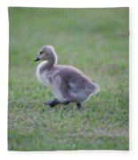Gosling Stroll Fleece Blanket