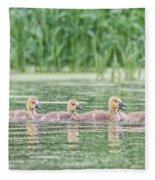 Goslings All In A Row Fleece Blanket