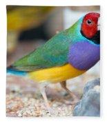 Gouldian Finch Fleece Blanket