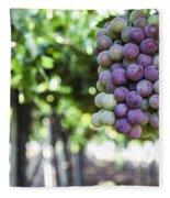 Grapes On Vine 2 Fleece Blanket