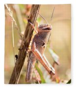 Grasshopper In The Marsh Fleece Blanket