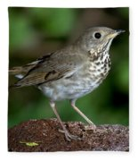 Gray-cheeked Thrush Catharus Minimus Fleece Blanket