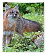 Gray Fox Fleece Blanket
