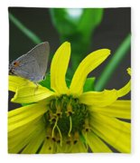 Gray Hairstreak Butterfly Fleece Blanket