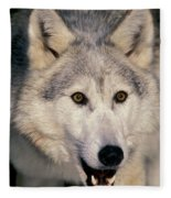 Gray Wolf Canis Lupus, Minnesota Fleece Blanket