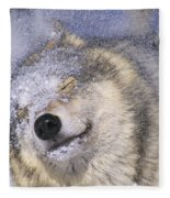Gray Wolf Canis Lupus Shaking Snow Off Fleece Blanket