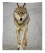 Gray Wolf Denali National Park Alaska Fleece Blanket