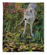 Gray Wolf Drinking Fleece Blanket