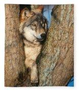 Gray Wolf In Tree Canis Lupus Fleece Blanket
