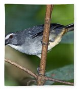 Grayish Saltator Fleece Blanket