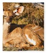 Greater Kudu Calf Fleece Blanket