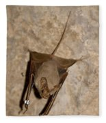 Greater Mouse-tailed Bat Rhinopoma Microphyllum Fleece Blanket