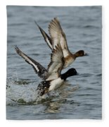 Greater Scaup Pair Fleece Blanket