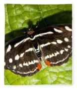 Grecian Shoemaker Butterfly Fleece Blanket