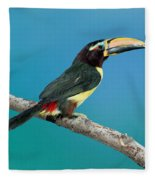 Green Aracari On Branch Fleece Blanket