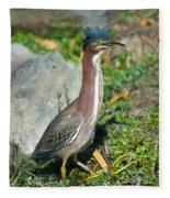 Green-backed Heron Butorides Virescens Fleece Blanket