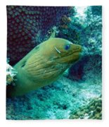 Green Moray Eel With Cleaning Fish Fleece Blanket
