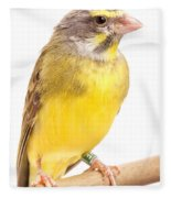 Green Singing Finch Crithagra Mozambicus Fleece Blanket
