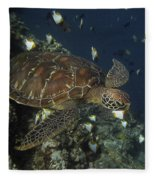 Hawksbill Turtle Fleece Blanket