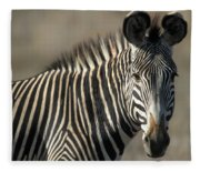 Grevys Zebra Standing In Plains Kenya Fleece Blanket