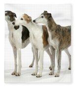 Greyhound Dogs Fleece Blanket