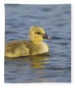Greylag Goose Gosling Zeeland Fleece Blanket