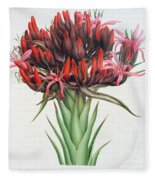Gymea Lily Fleece Blanket