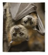 Hang In There Fleece Blanket