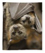 Hang In There Fleece Blanket