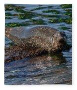 Harbor Seal At Low Tide Fleece Blanket