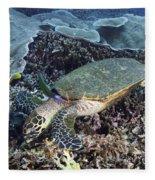 Hawksbill Sea Turtle Fleece Blanket