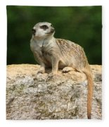 Hear No Evil See No Evil Speak No Evil Fleece Blanket
